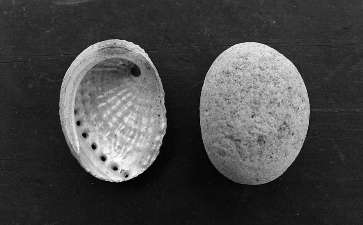 Shell next to a pebble