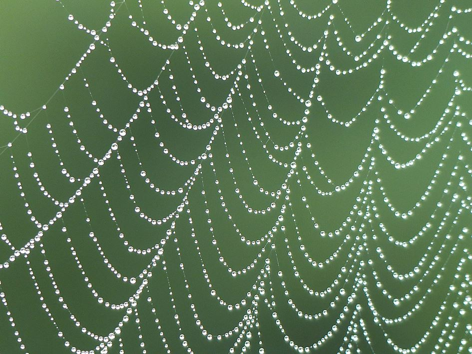 Pearls of raindrops strung on spiderweb