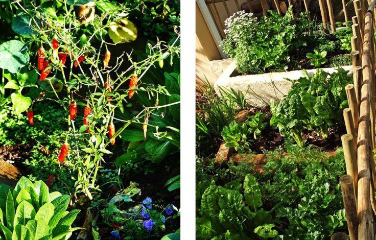 Mixed vegetable garden