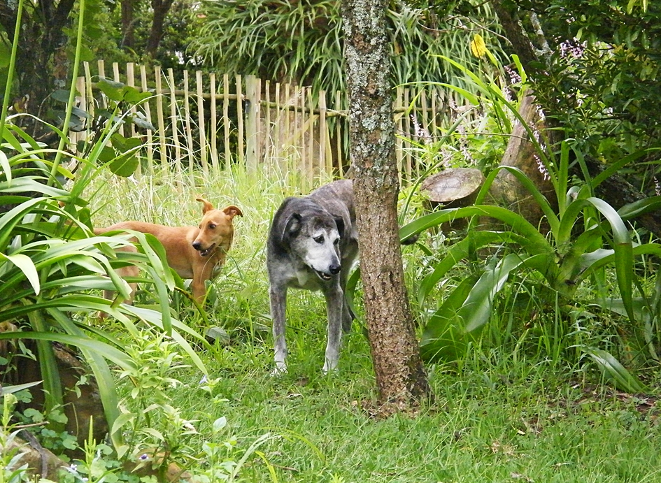 Dogs in mini-grassland in wildlife garden