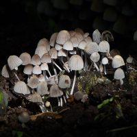 Fairy-tale fungi: The magic of mushrooms