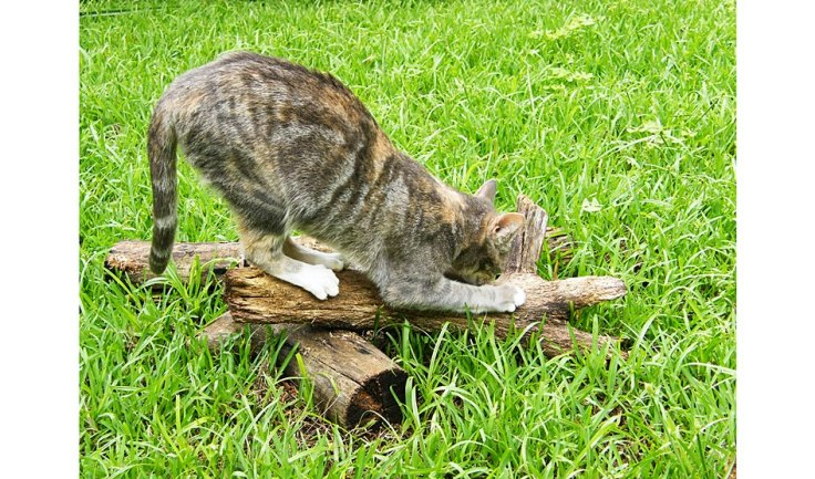 Scratching post for pet cats in enclosed cat garden