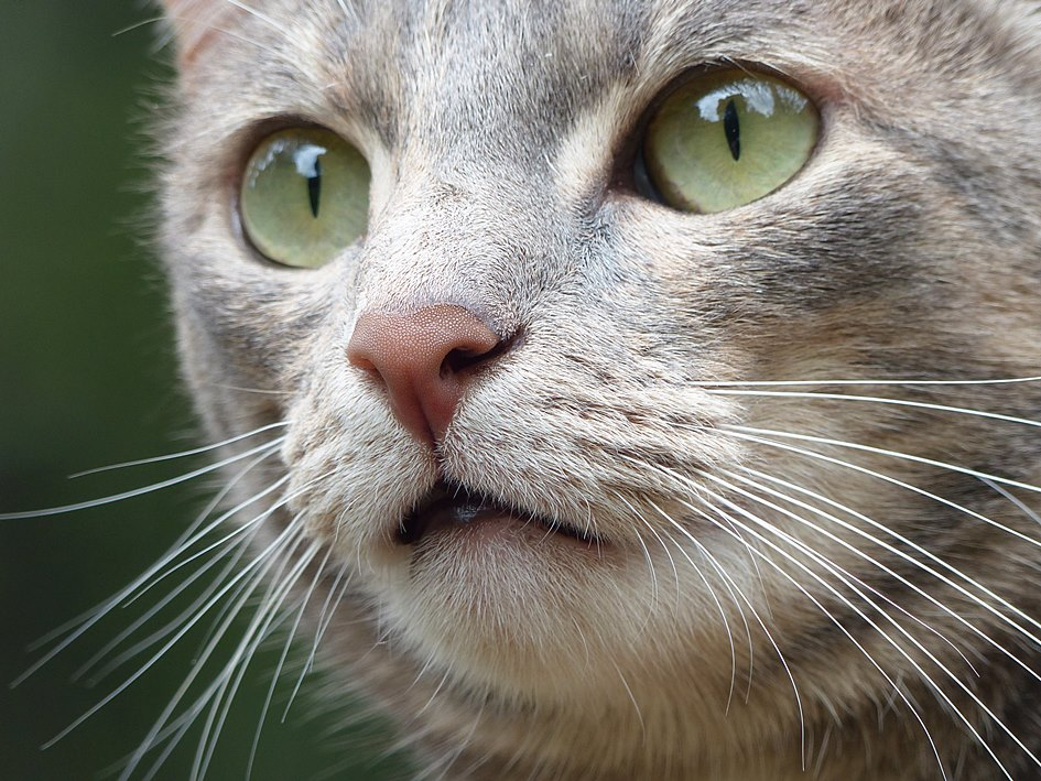 Cats and wildlife: Domestic cat and wildlife gardening