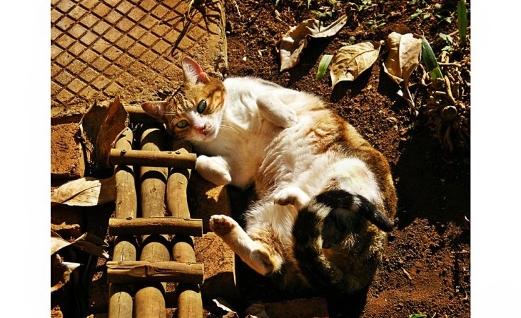 cat-rolling-earth-suburban-garden