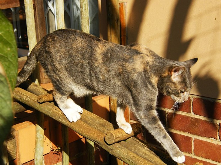 cat-walkway-suburban-garden