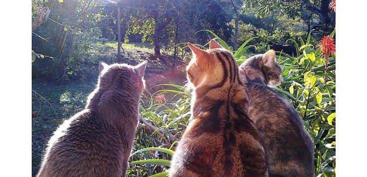 cats-suburban-wildlife-garden