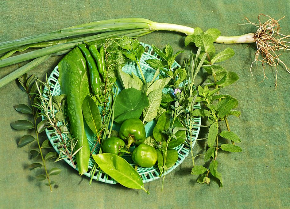 Fresh green herbs and vegetables from garden
