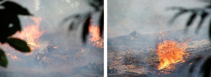 Plantation-fire-suburbs-KwaZulu-Natal
