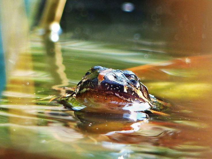 River-frog-blinking