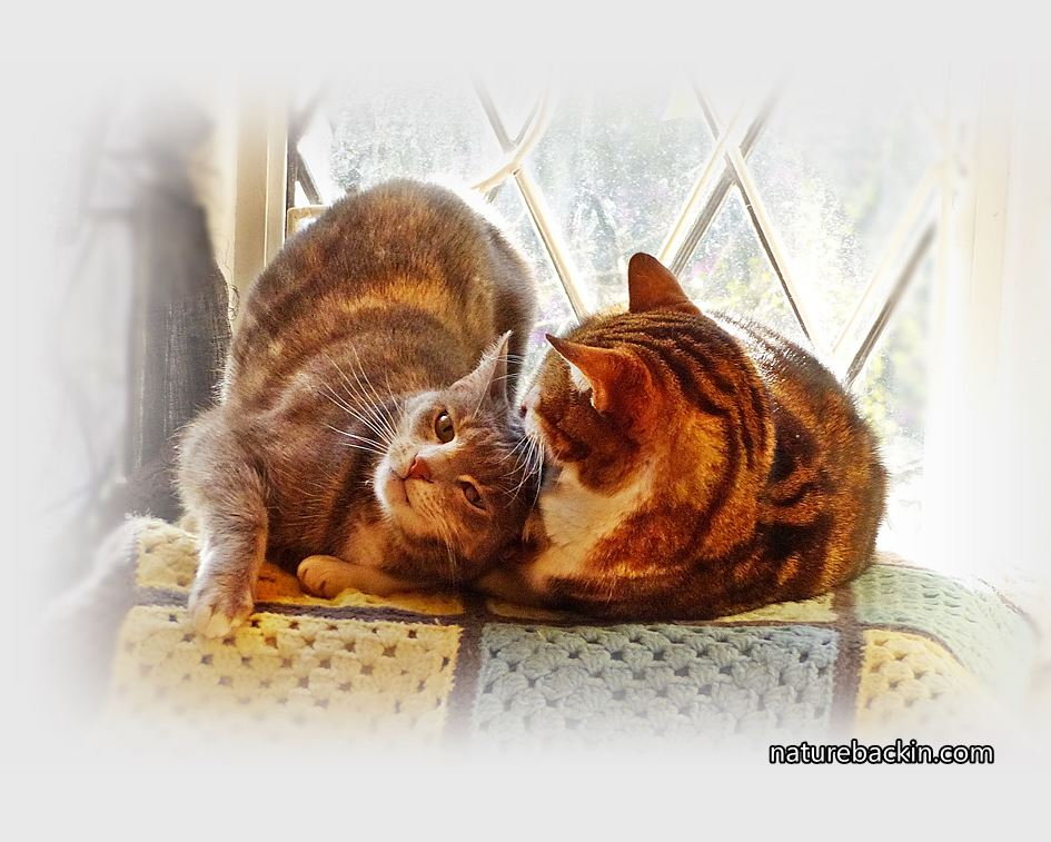 Friendship between cats