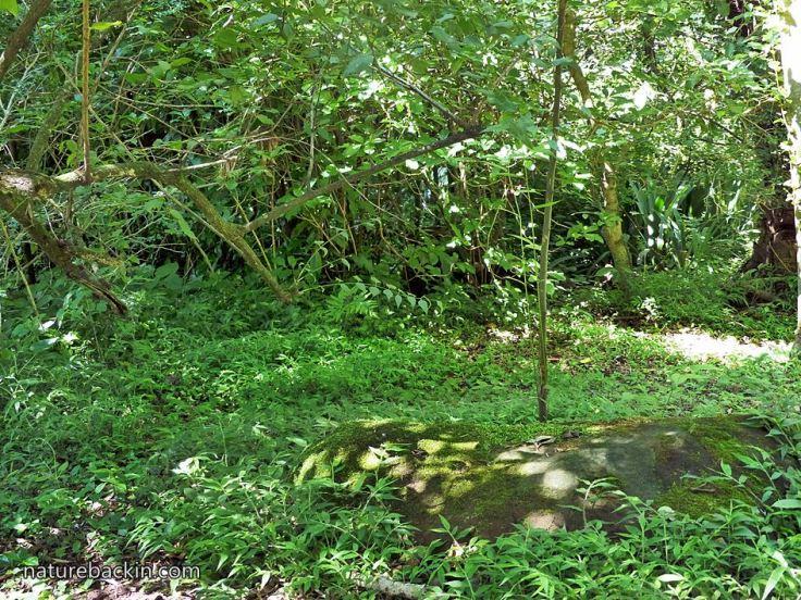 Woodland-suburban-garden