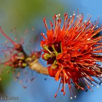 From mountains to gardens: Scarlet flowers that brighten winter drabness