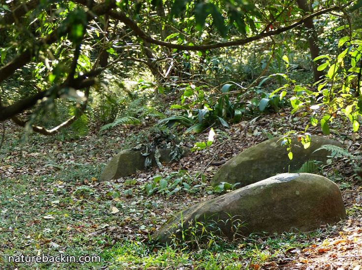3 Fallen-leaves-in-wildlife-garden
