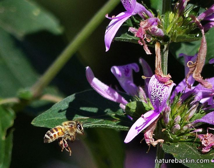 4 Honeybee-and-flower