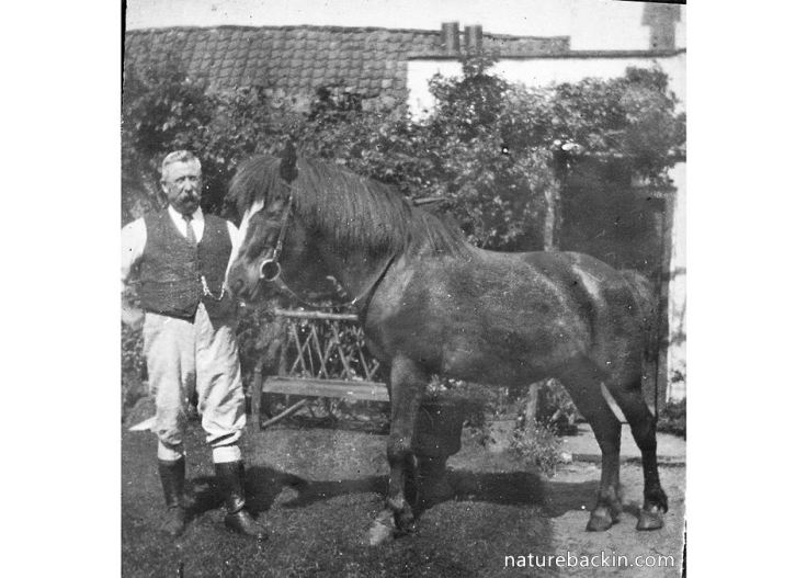 Great-Grandfather with horse