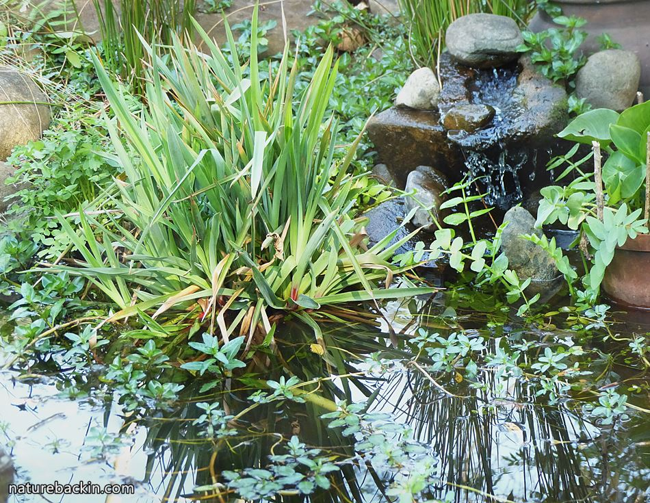 DIY cascade in a garden pond