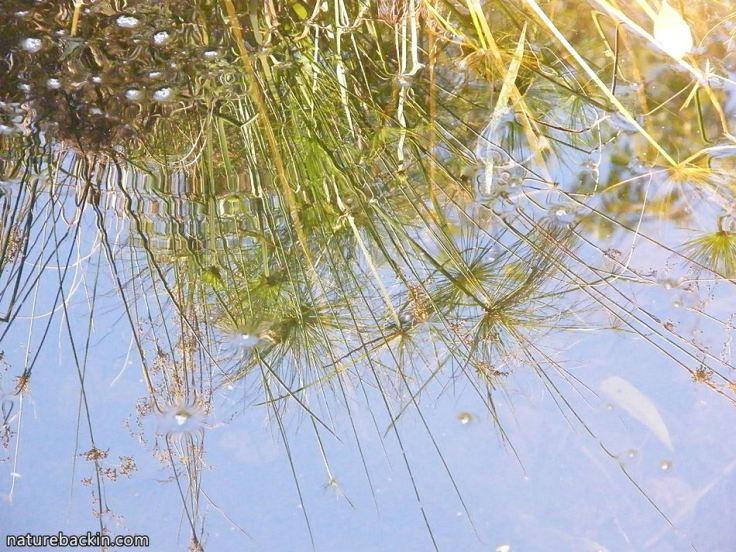 9 Garden pond