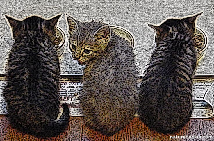 Feral cat foundlings 2