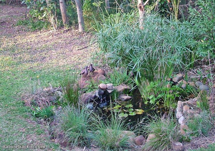 2 Garden Wildlife pond