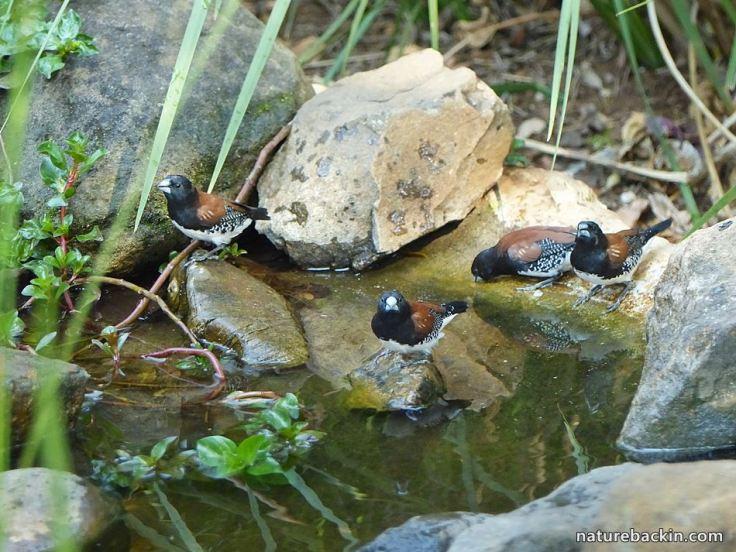 3 Garden Wildlife pond