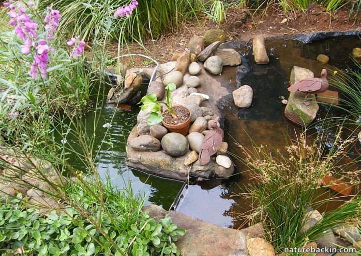 5 Garden Wildlife pond