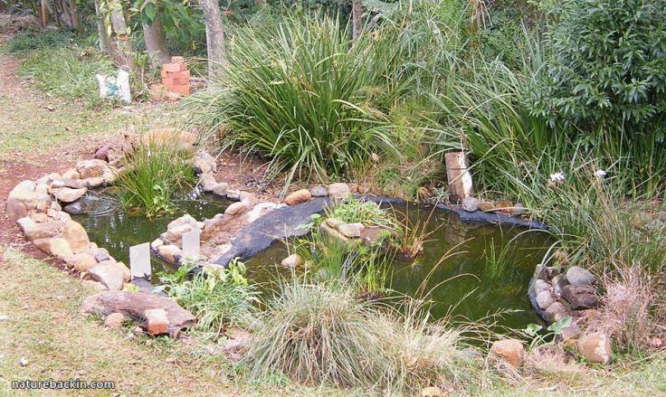 6 Garden Wildlife pond