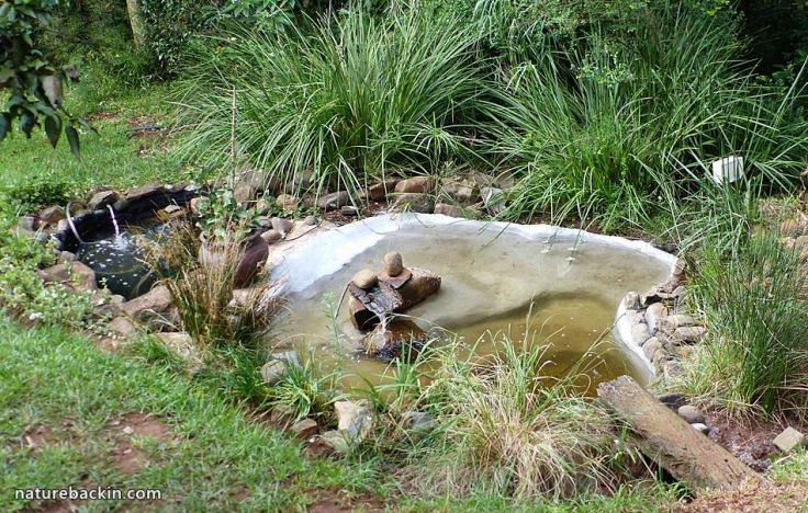 7 Garden Wildlife pond