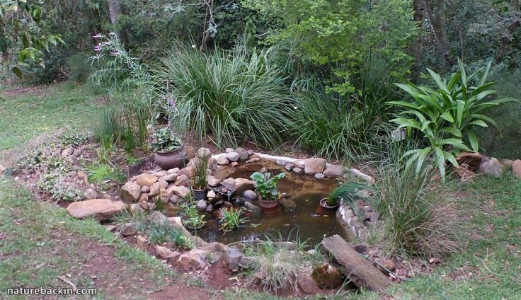 8 Garden Wildlife pond