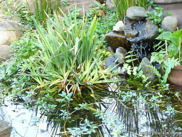 9 Garden Wildlife pond