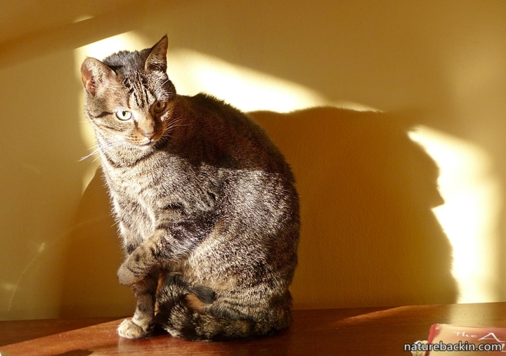11-Tabby-cat-winter-sun