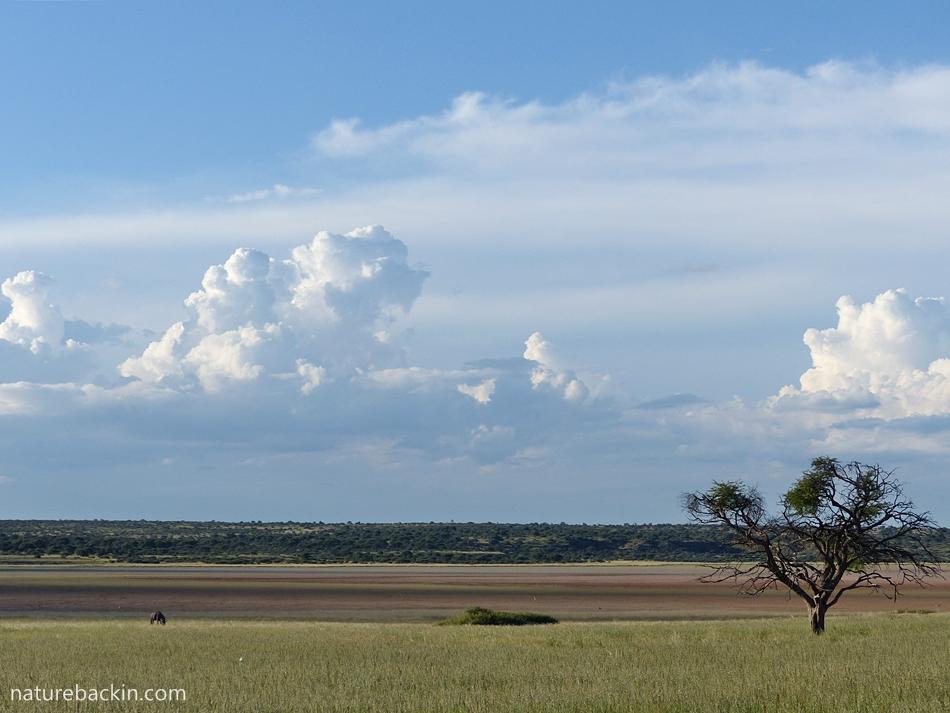 Mabuesehube Pan, Botswana