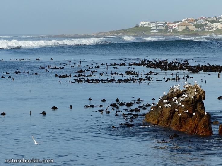 Suburban seaside 3