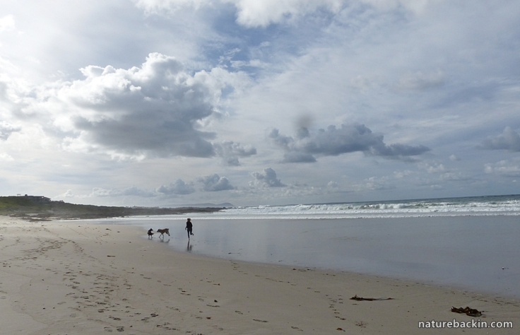 Suburban seaside 8
