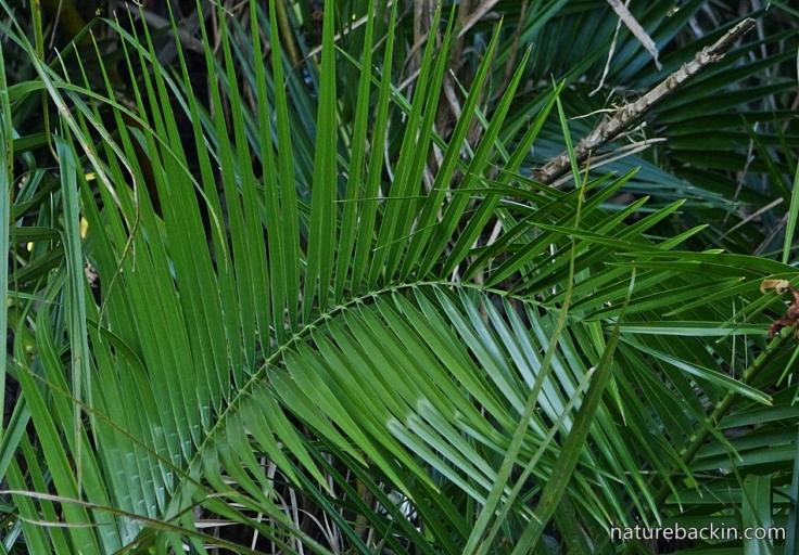 11 Palm leaf