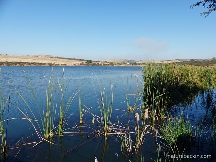 2 Tala Dam