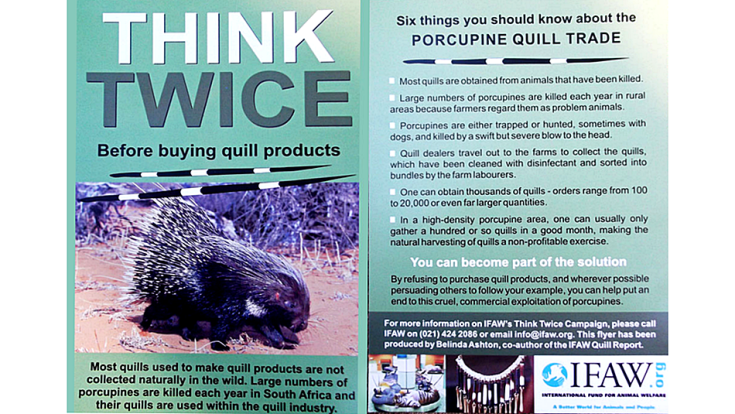 8 Cape porcupine IFAW poster quill trade