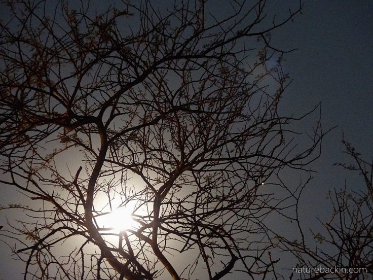 1b Moon eclipse