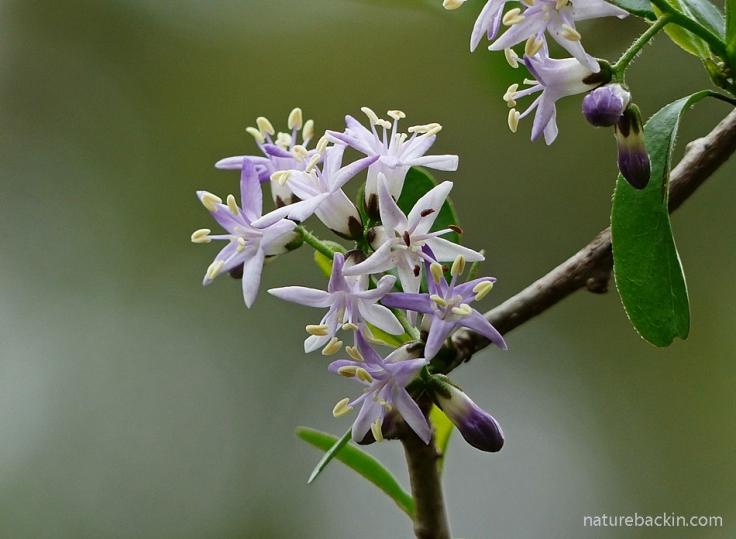 3 Puzzle-Bush-Flowers