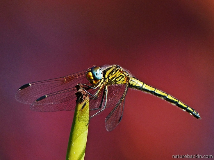 11 Dragonfly