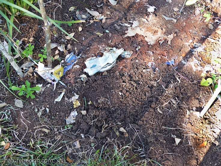 The soil beneath the layers of newspaper and cardboard in a new no-dig flowerbed
