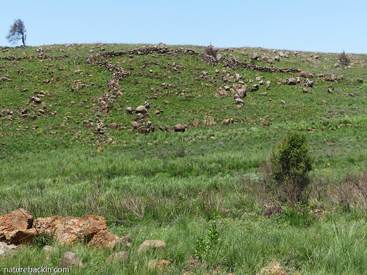 Dry stone walls in grassland in the Dargle area, KwaZulu-Natal