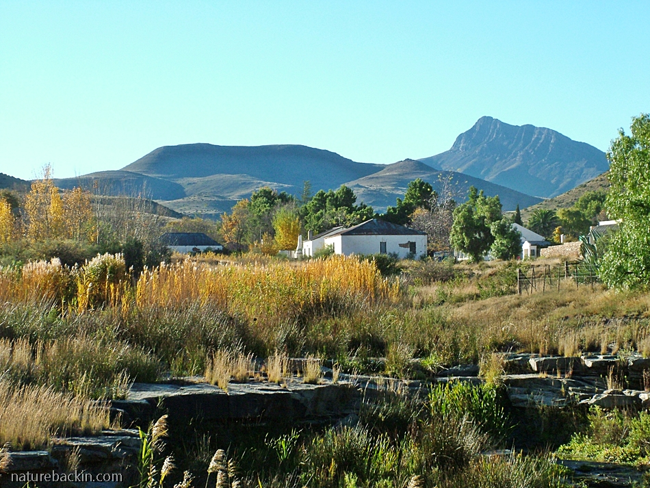 Small Karoo town of Nieu Bethesda with the Compassberg in the background