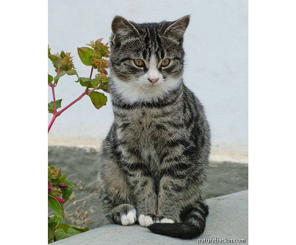 Tabby kitten in Nieu Bethesda, South Africa