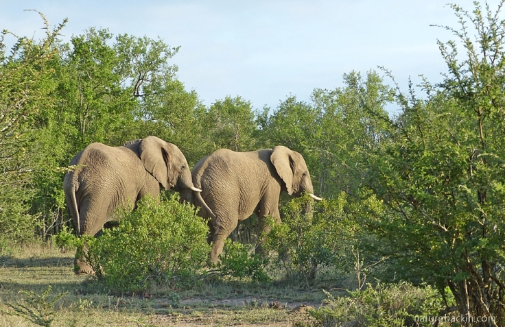 Elephants amicable again after sparring match