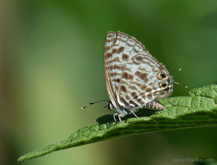 13 Butterfly
