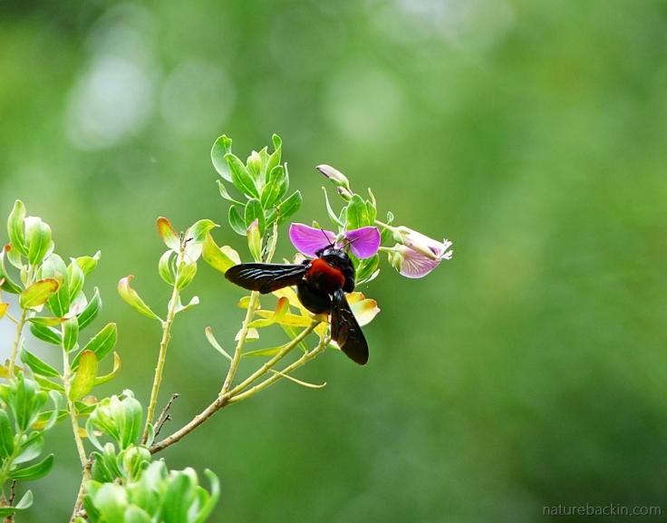 8 Carpenter-bee