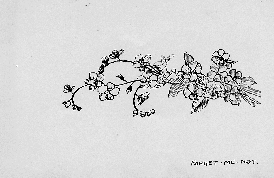 Sketch of English wildflower: Forget-me-not