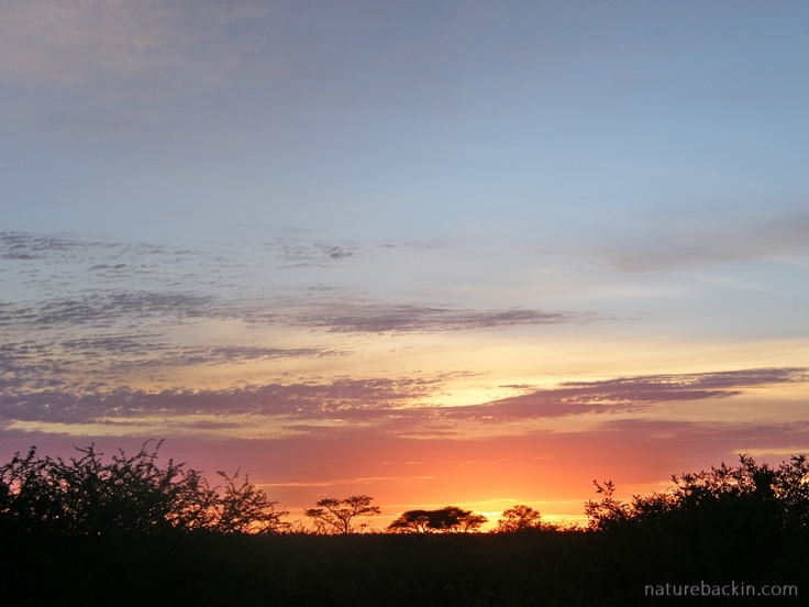 Sunrise over the dunes Central Kalahari Game Reserve