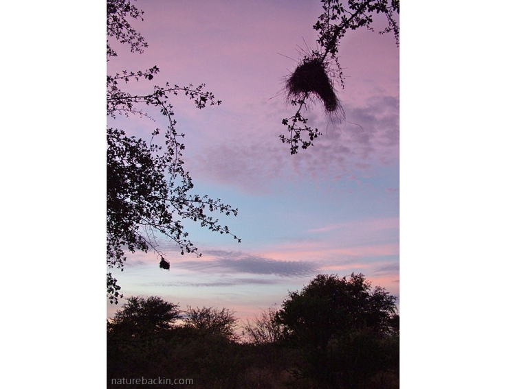 Dawn sky at Leopard Pan camp, Central Kalahari Game Reserve