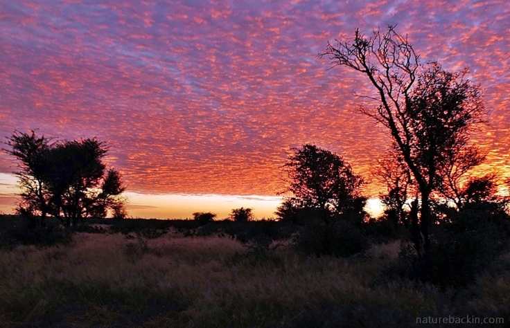 Vivid sunrise sky at Central Kalahari Game Reserve, Botswana